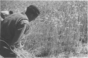 1941 Borghi Terzo Celere 059